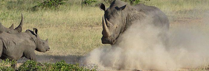 rhino-family.jpg