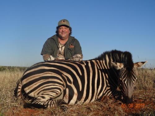 zebra 00881