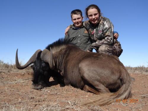 black wildebeest 00989