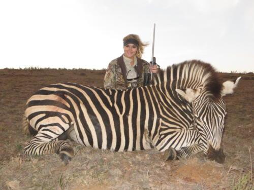 zebra 2411