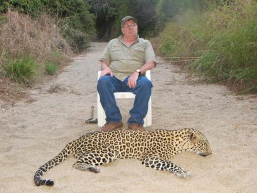 leopard 2433