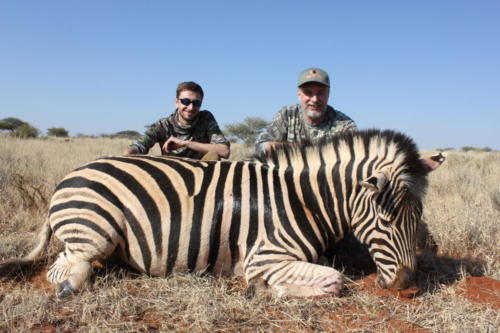 zebra 8739