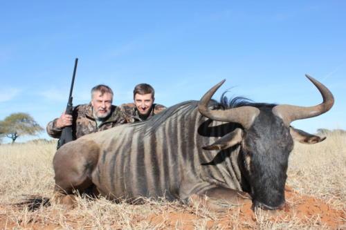 blue wildebeest 8787