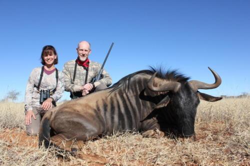 blue wildebeest 8802