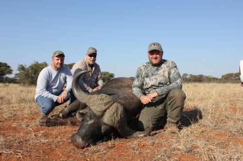 buffalo 9984